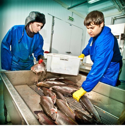 Trout processing and caviar processing services