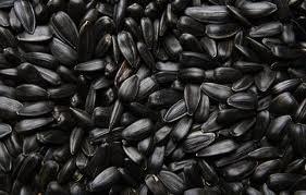 Покупаем семена подсолнечника для масла по России (Саратовская, Самарская и Оренбургская обл) и Казахстану (Западно-Казахстанская обл)  Объем: 2000 тонн в месяц Качество: по ГОСТу