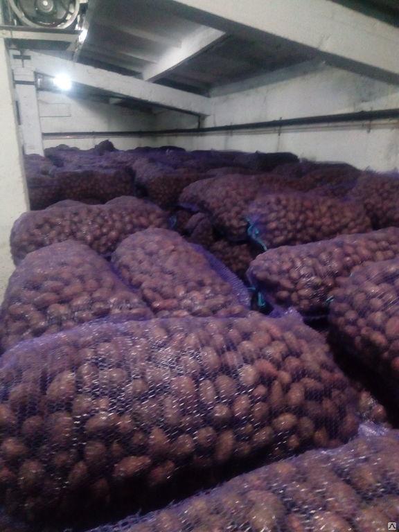 <p>1000 ton beyaz ve kırmızı &ccedil;eşit&nbsp;tohum patatesleri ALINACAK, fiyat en fazla 0.12$ olmalı (8.5 ruble).</p>  <p><em>(rus&ccedil;adan terc&uuml;me edildi)</em></p>