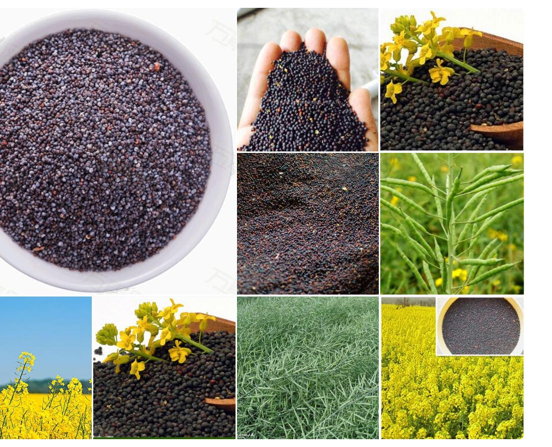 <p>We will buy large quantities of sunflower and rapeseed oil. Please send offer with product photos. Purchase volume: 650 tons of each product per month</p>