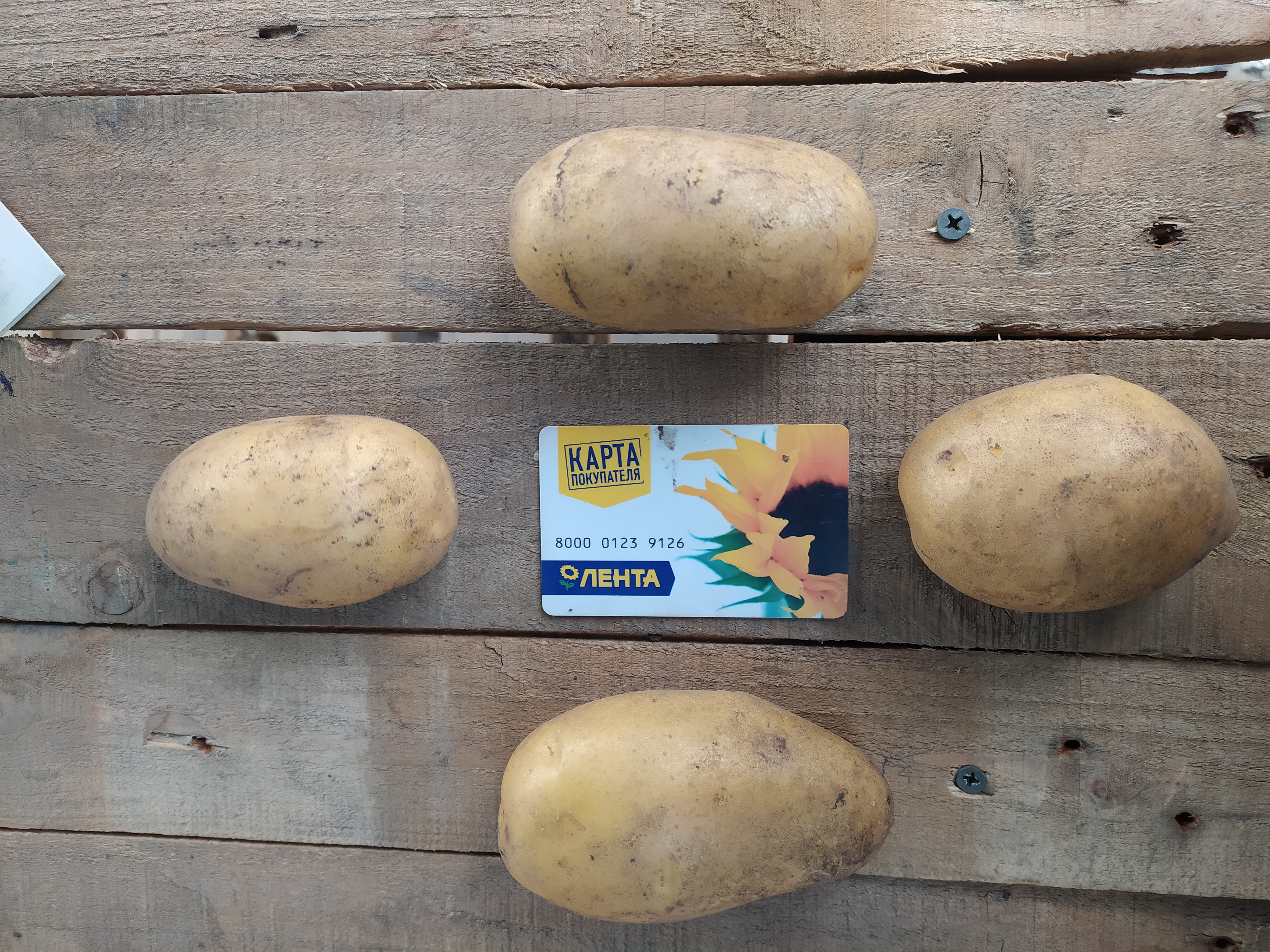 <p>potatoes WANTED. Varieties: Gala, Queen Anne, Colombo etc. From 20 tons.&nbsp;</p>