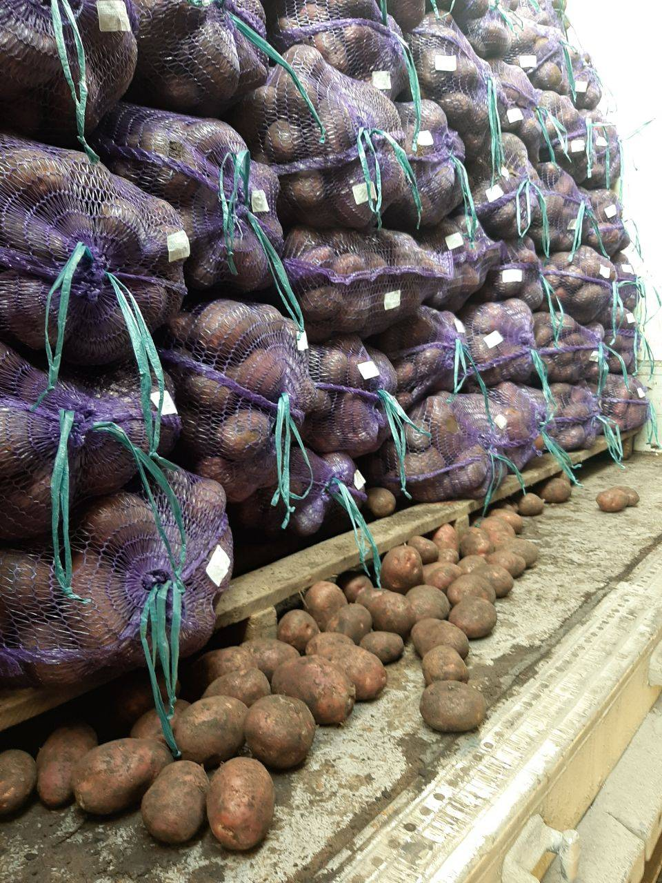 <p>I will buy potatoes in bulk. At least 80 tons per week</p>